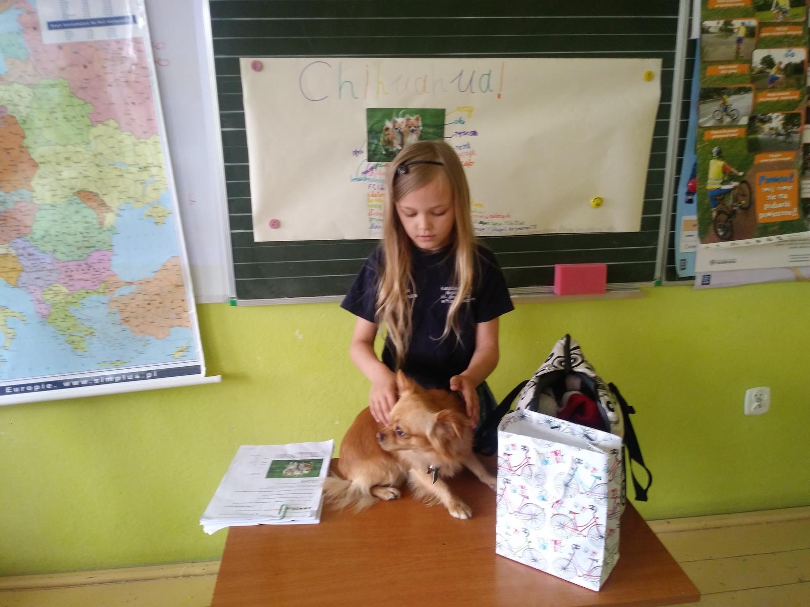 Cztery łapy - lekcja prowadzona przez Oliwię