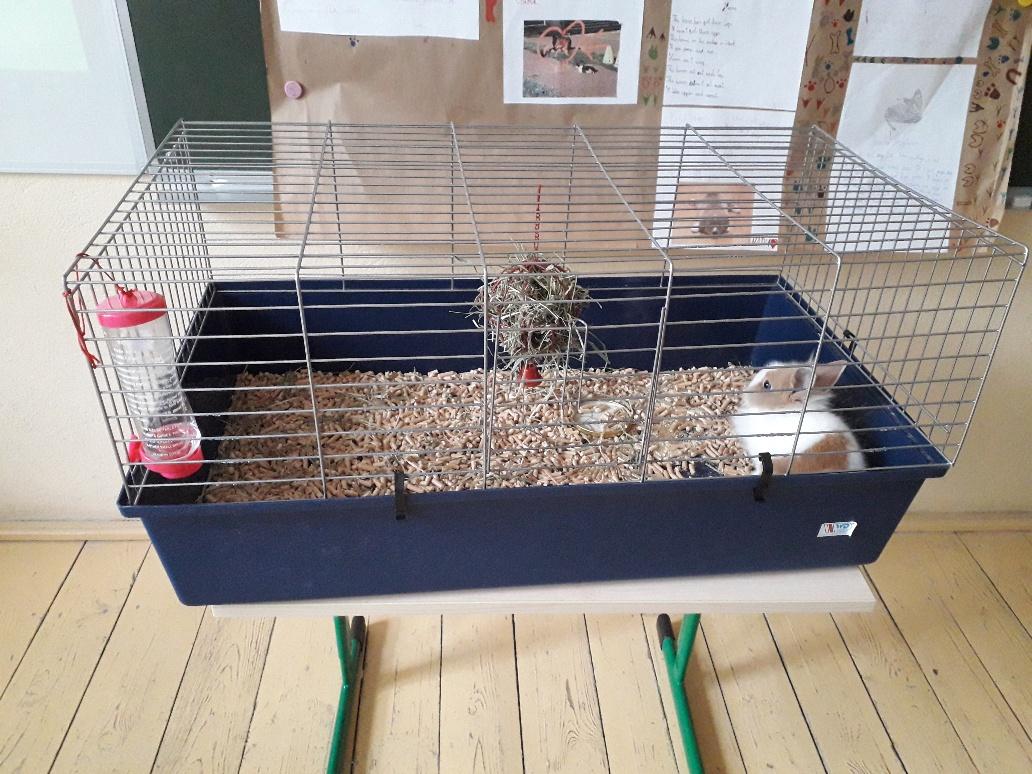 Lekcja o królikach