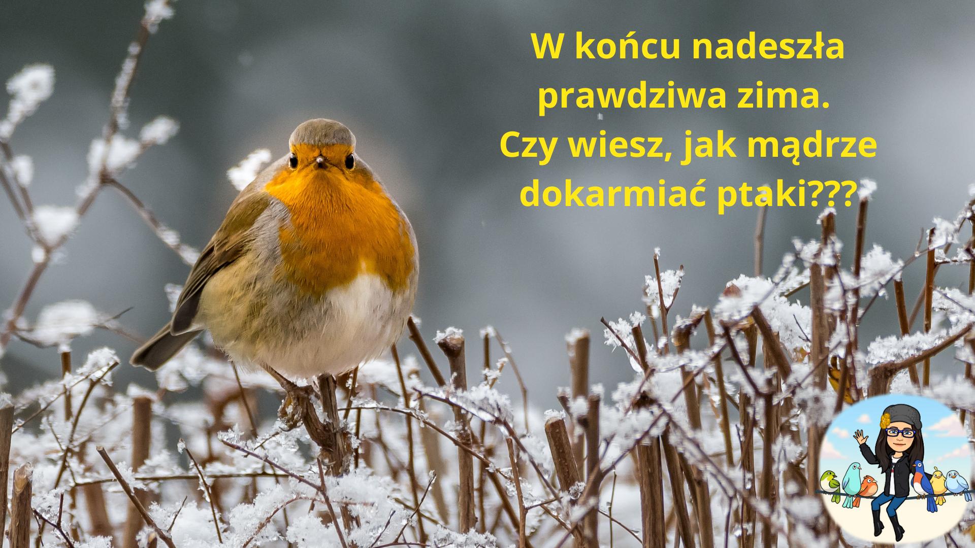 Mądre dokarmianie ptaków zimą.